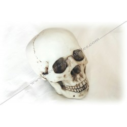 Masonic Resin Skull -...